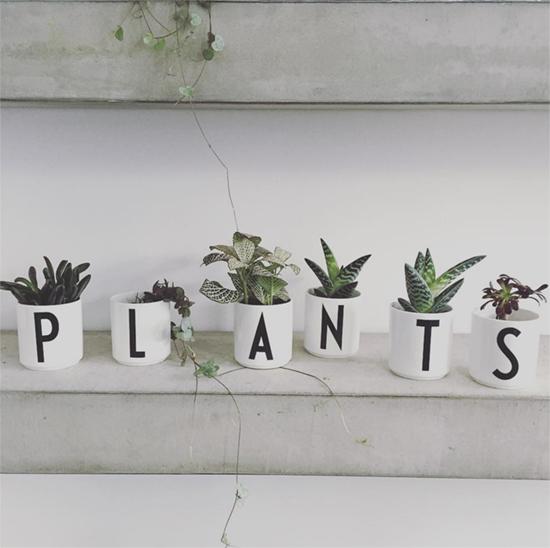 Grace & Thorn Plants